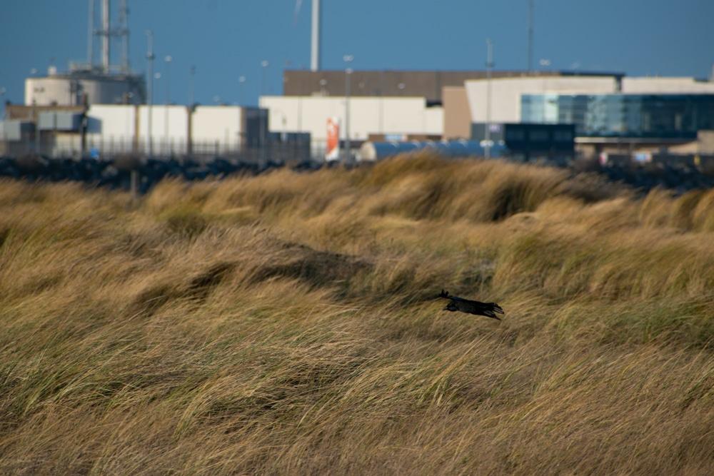 Natuur rond de haven van Zeebrugge waar ze sterk aandacht aan besteedt - Chateau Residenties